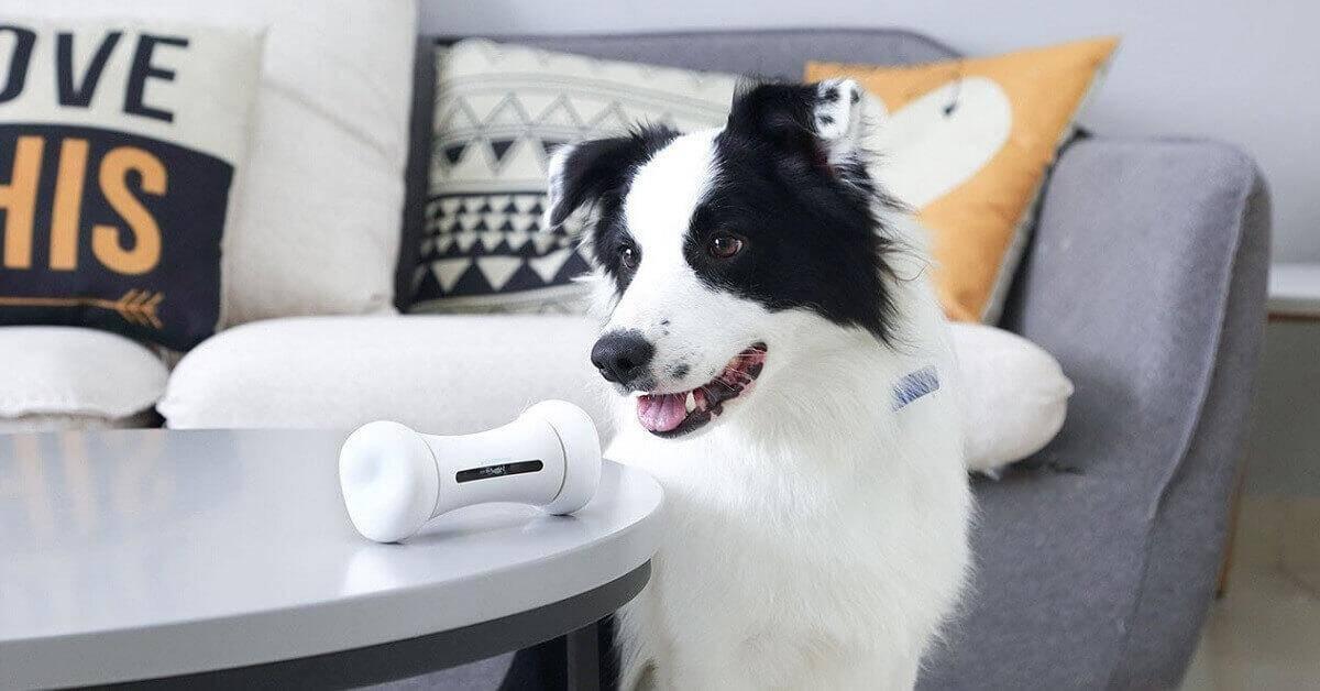 wickedbone speeltje voor je hond