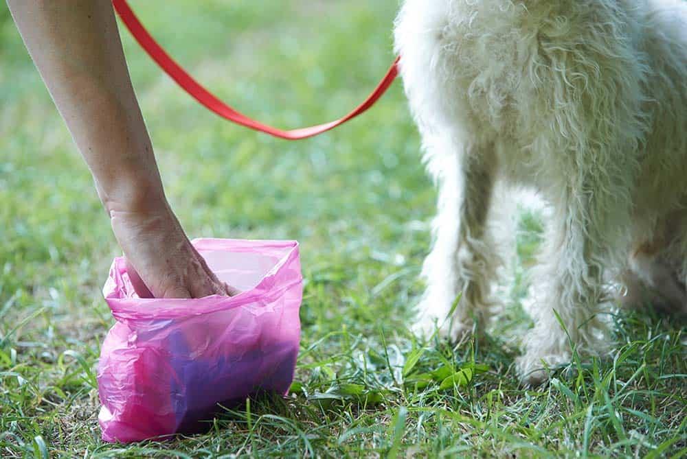 Hond poep opruimen zakje hondenpoep