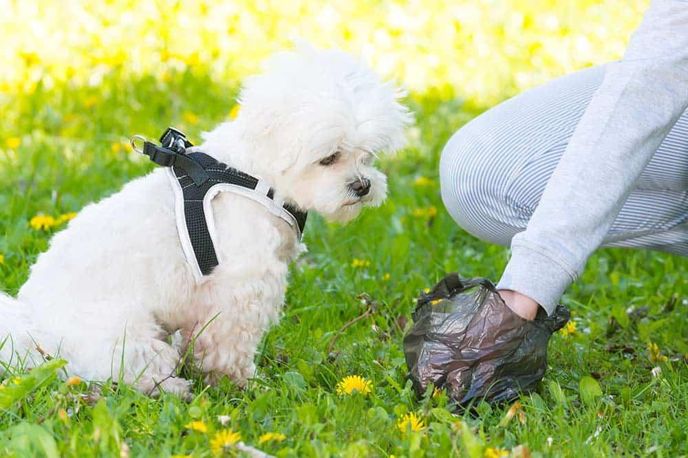 Hond poep opruimen zakje